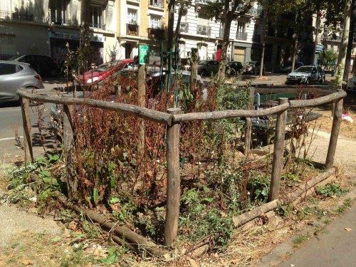 vegetalisation-2af90.jpg